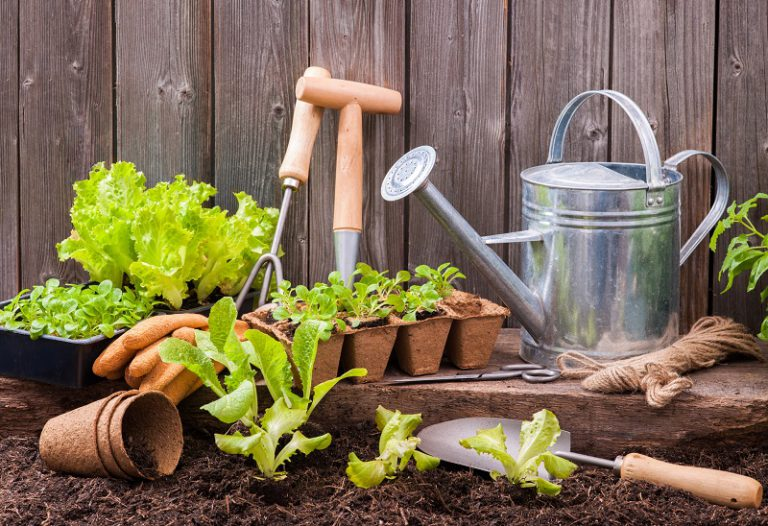 Gardening Tips For Beginner – Why Growing Your First Vegetable is So Hard