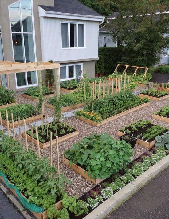 gardening for beginer